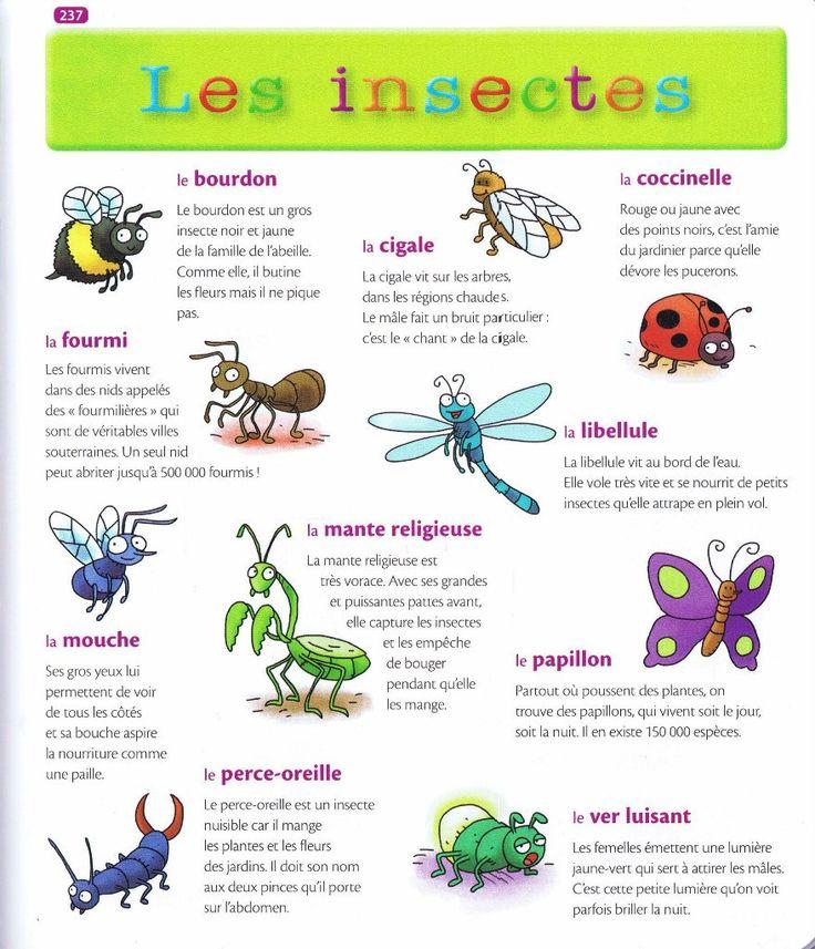 Source: Mon premier dictionnaire de Français Larousse