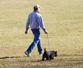 How to Give Your Dog a Good Leash on Life : The Humane Society of the United States