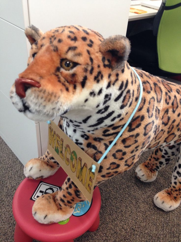 mr. leopard at our office