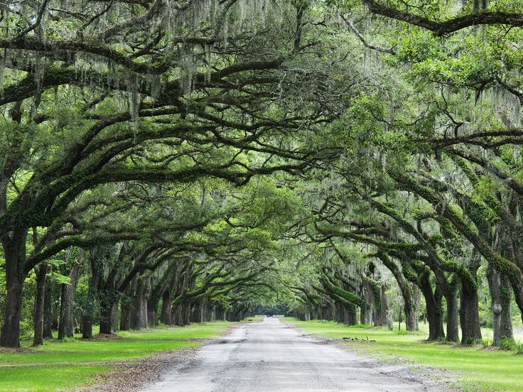 Savannah Georgia Now I Need This Driveway With A Huge Planation House At The End Of It Things Love Pinterest Chats
