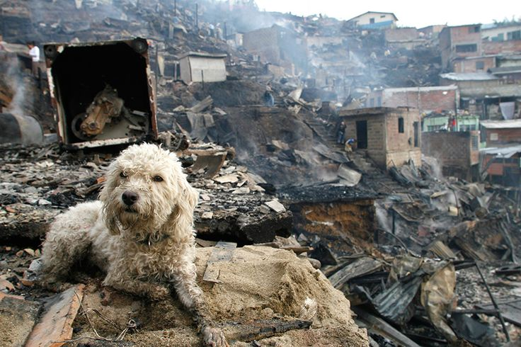 There are already plans to rescue pets that Fort McMurray evacuees had to leave behind, but experts say animals are also miraculously fire-smart