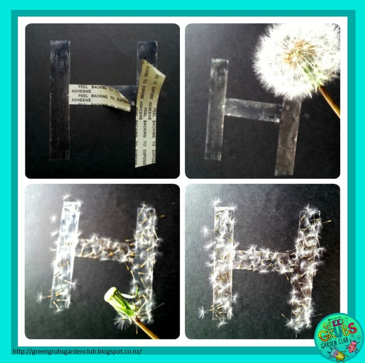 Creating Dandelion clock pictures - simple fun with double sided tape/glue, paper and dandelion clocks! {Green Grubs Garden Club Blog}
