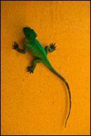 Reptiles, anfibios y la Salmonella