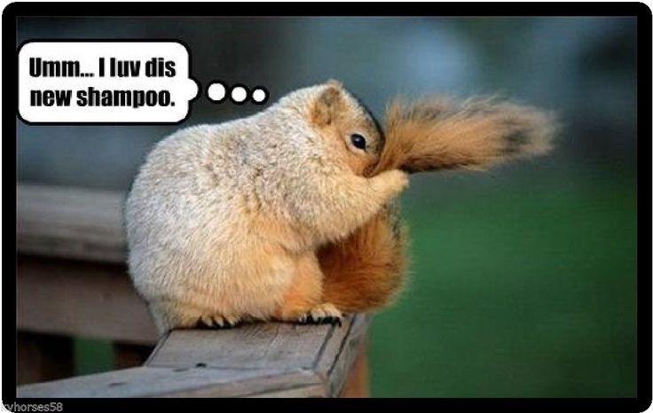 Funny Squirrel Humor New Shampoo Refrigerator Magnet | eBay