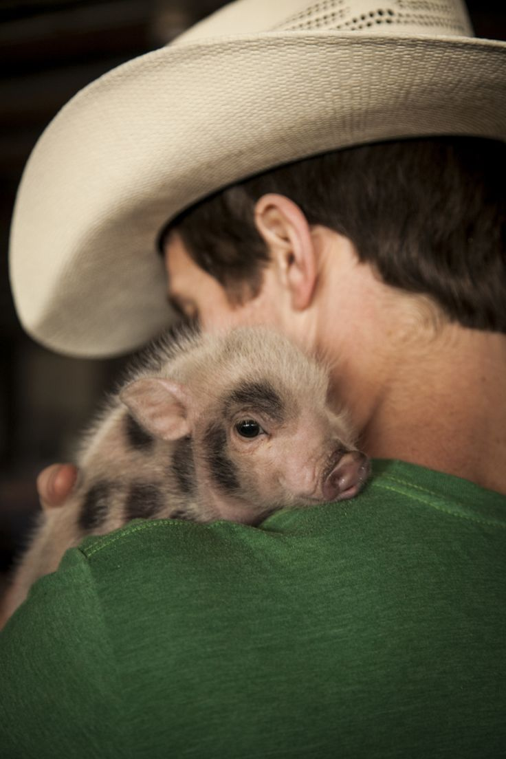 Micro Mini Pig...WANT