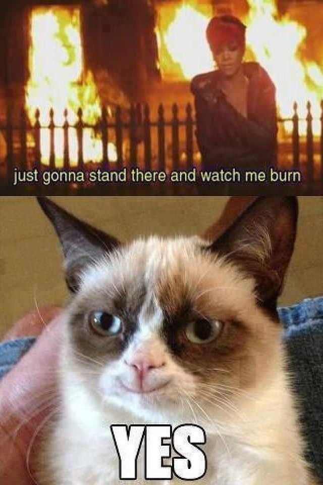 angry cat meme cartoon - photo #38