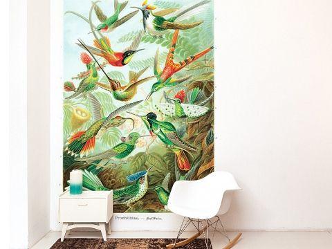 Behang op maat | Naturalis Originals - Behang, muurposters en decoratie op basis van de natuurhistorische collectie van Naturalis