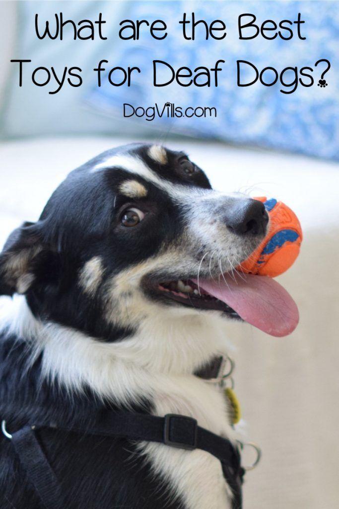 Top 10 Best Toys For Deaf Dogs Dog Toys Deaf Dog Diy Dog Toys