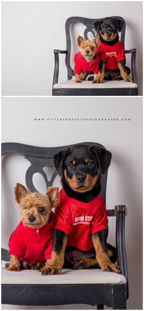Rottweiler Puppy Pittsburgh Dog Photographer Best