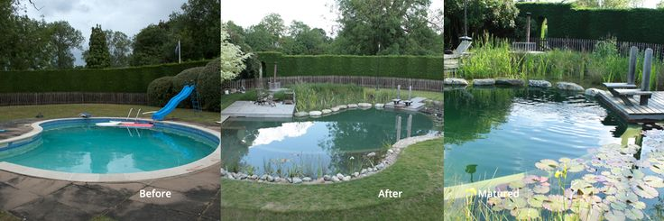 Pin by kerry baker on natural pools pinterest for Koi pond and swimming pool