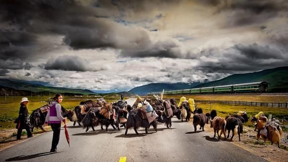 The Last of the Tibetan Nomads.