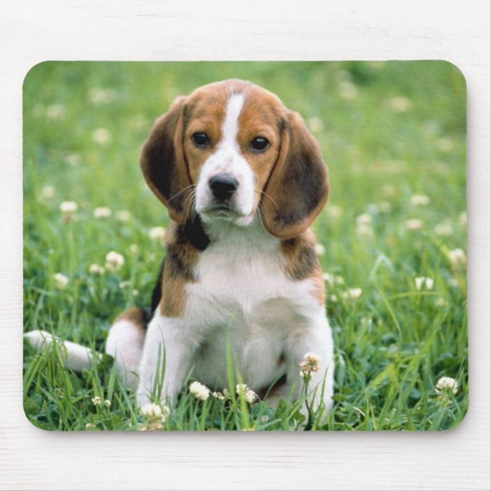 Beagle Puppy Mouse Pad Cute Beagles Harrier Dog Beagle Dog Breed