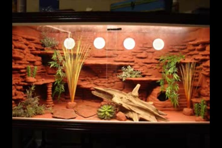 59 Best Images About Reptile Terrarium Inspiration On