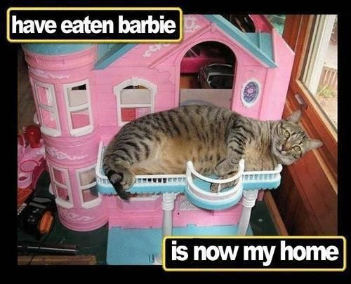 Kitty has eaten Barbie