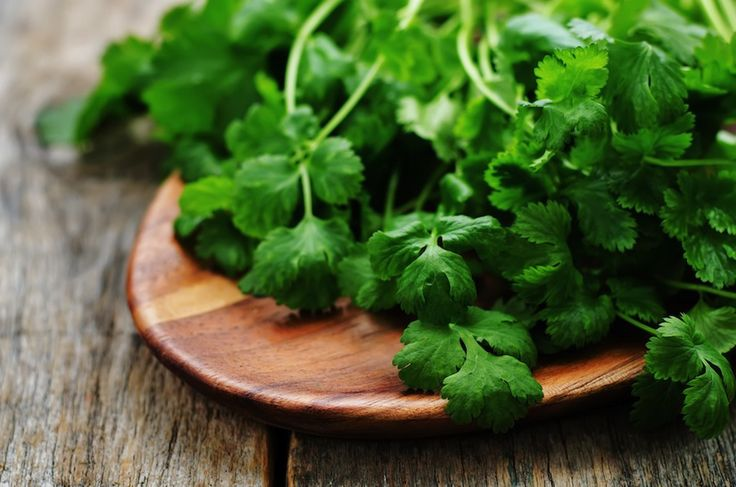Learn how to grow cilantro and keep it from bolting in your garden. http://gardenseason.com/how-to-grow-cilantro/