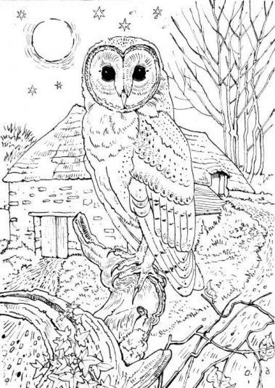 Realistic Owl In A Full Moon Night Coloring Page For Grown Ups