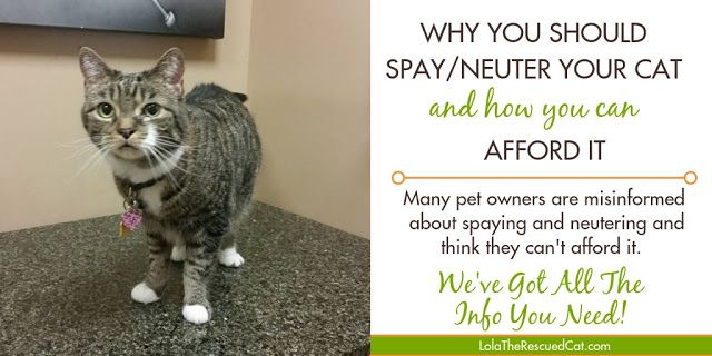 Why You Should Spay Neuter Your Cat And How You Can Afford It Cat Parenting Spay Pet Parent