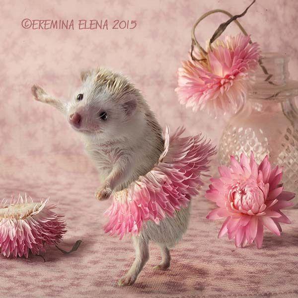 hedgehogs ballet by Elena Eremina