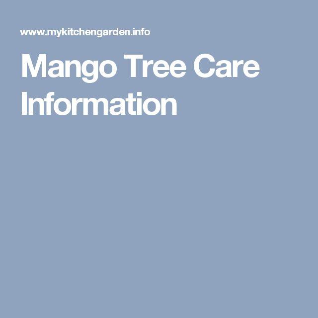 Mango Tree Care Information
