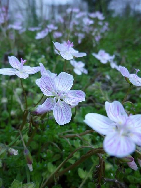 in the morning dew...: Morning Dew, Mornings Dew