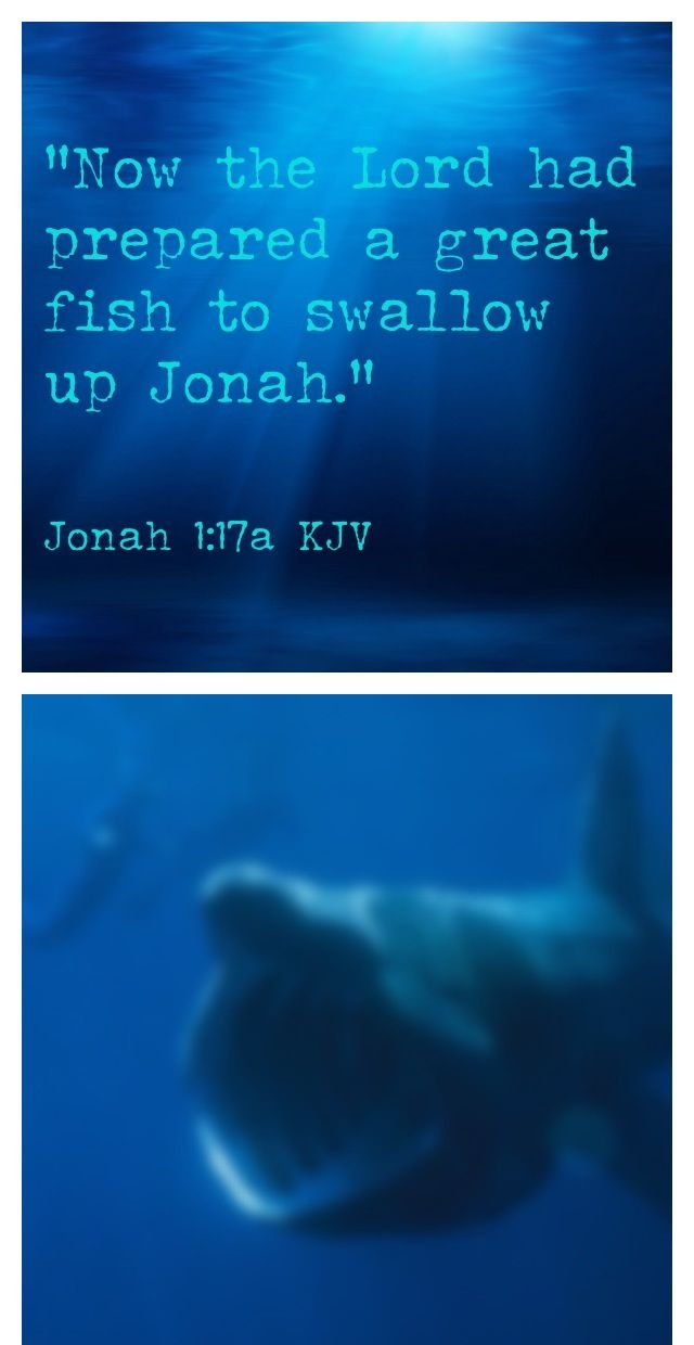 Jonah 1 17 Kjv Quot Now The Lord Had Prepared A Great Fish