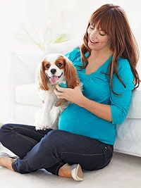 Preparing Your Dog for Baby: Ideas to make the transition smoother for your furry friend.