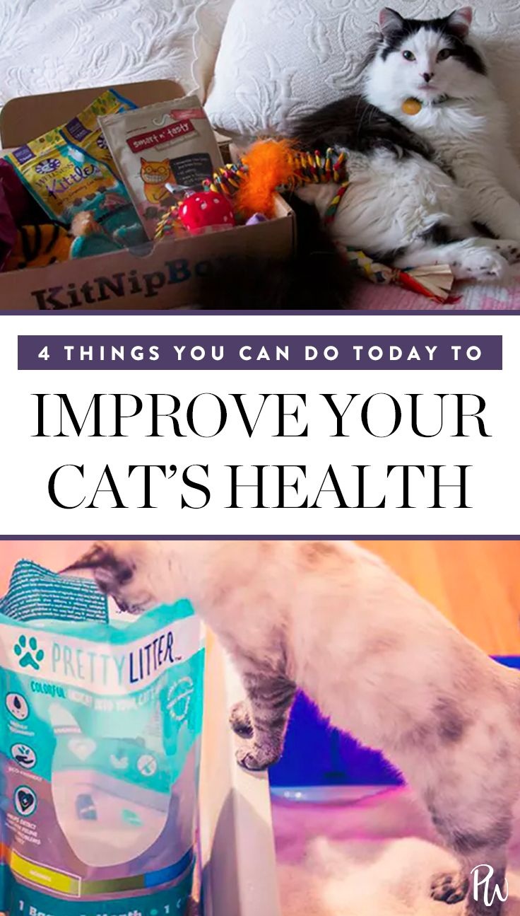 4 Things You Can Do Today To Improve Your Cat S Health Pet Insurance Cost Pet Insurance Reviews Sick Pets
