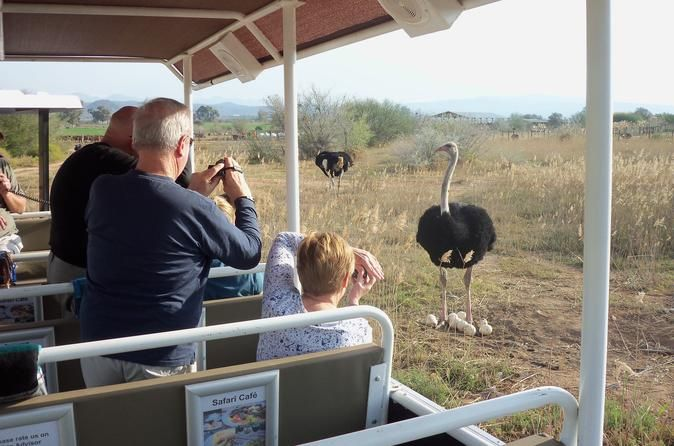 #Safari #Tractor #Tour bring you close to an #ostrich nest and the male keeping guard.