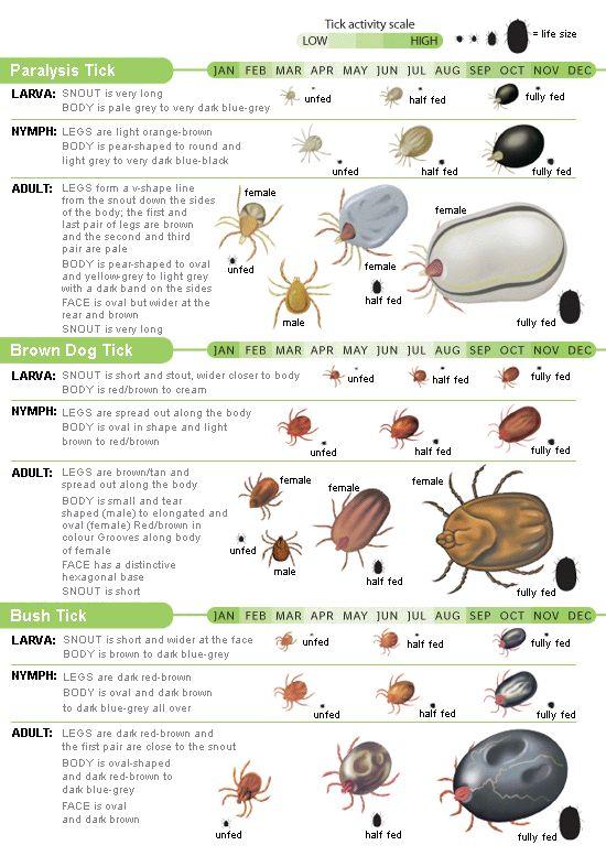 tick types