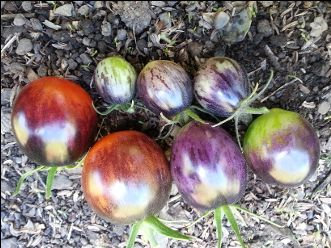 KALEIDOSCOPIC JEWEL - What amazing tomatoes!