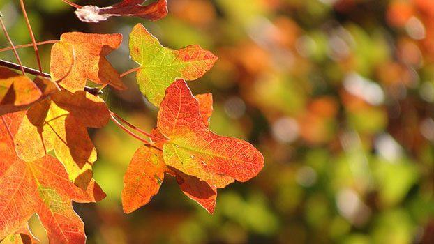 Autunno frasi e poesie per la stagione delle foglie che cadono