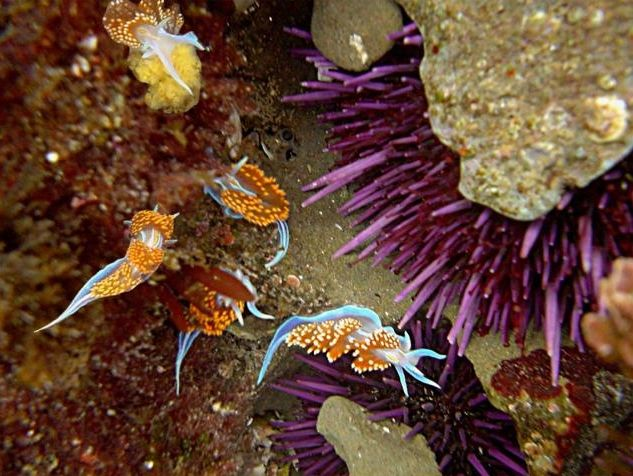 Tidepooling in San Diego's Cabrillo National Monument. Click to read the full article.