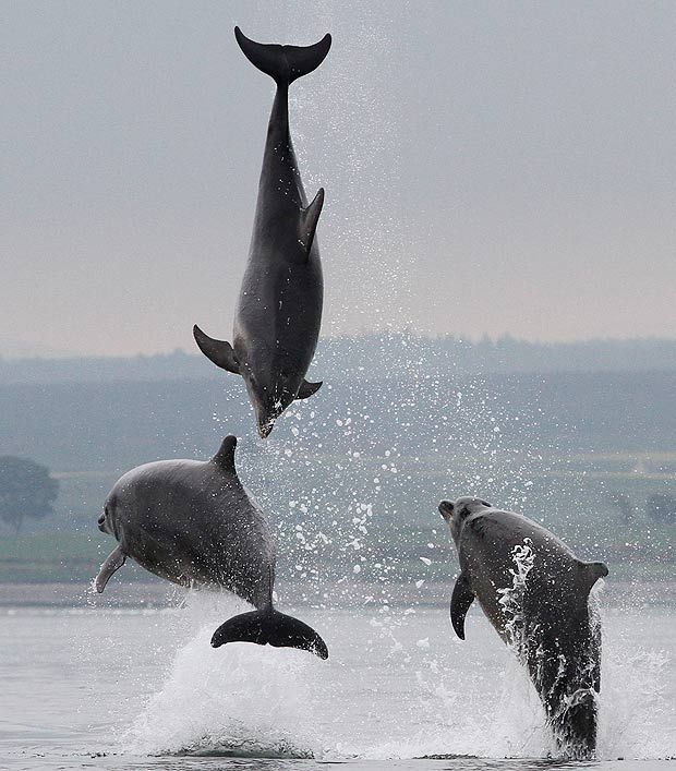 Three porpoises kept pace with the ship . . . as if to welcome them to their world    #voicesbeckon