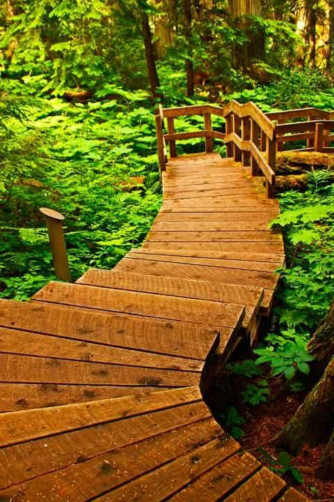Boardwalk, Old Growth Forest, Giant Cedar Hiking Trail, Mount Revelstoke Provincial Park, Parks Canada 062113Revel10V-7107