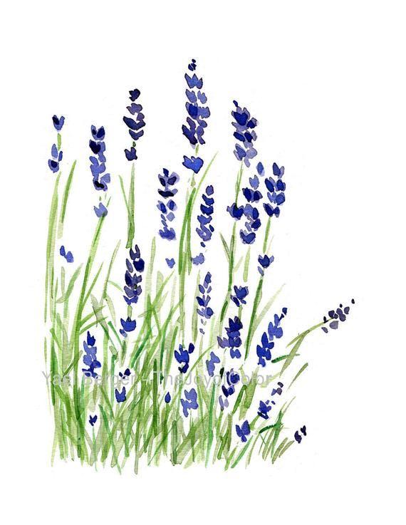 Lavande Plante Art Print Lavande Des Fleurs De Cerisier Violet