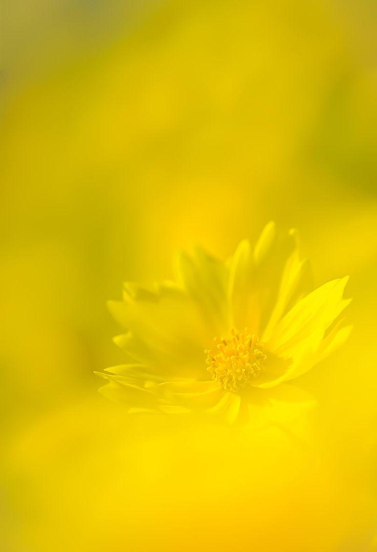 Yellow Flower by naoki nomura