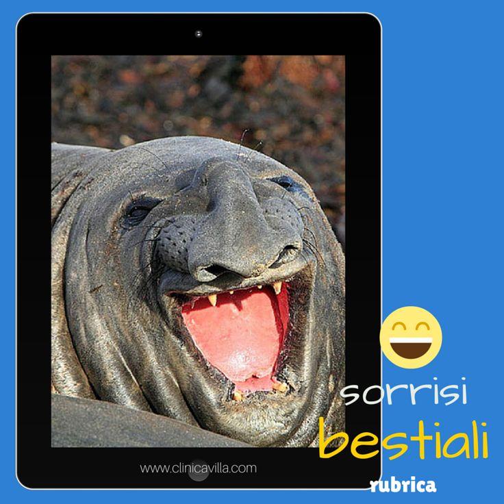 La bocca dei leoni marini è dotata di denti, caratteristica che permette loro di afferrare le prede che non vengono masticate ma inghiottite intere: i leoni marini mandano giù la preda in un sol boccone!