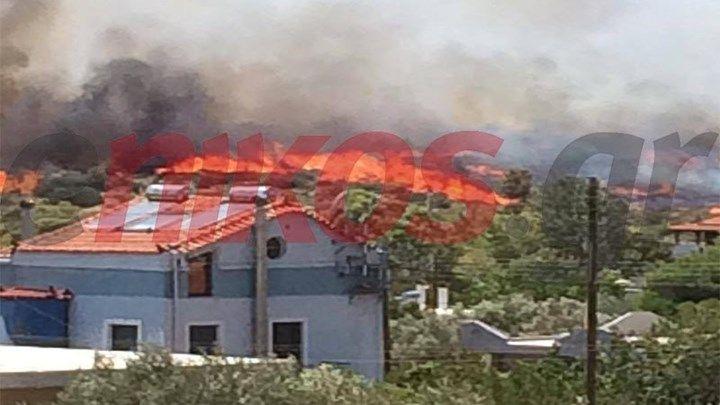 Κοντά στα σπίτια η φωτιά στην Ανάβυσσο - ΦΩΤΟ αναγνώστη
