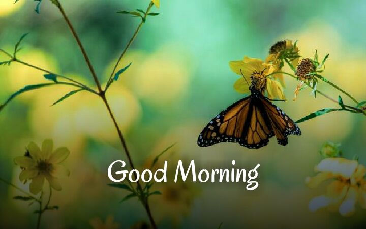 Butterfly Good Morning Images Butterfly Pictures Butterfly Wallpaper Spring Wallpaper
