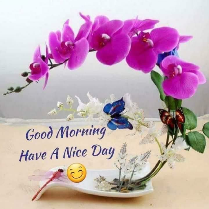Good Morning And Have A Nice Day Flower Butterfly Good Morning Quotes Beautiful Good Morning Beautiful Images Good Morning Images Flowers Good Morning Flowers