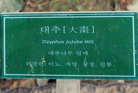 Zizyphus jujube Mill - Heojun Museum, Seoul, Soth Korea: http://kampo.ca/herbs-formulas/herbs/taiso/