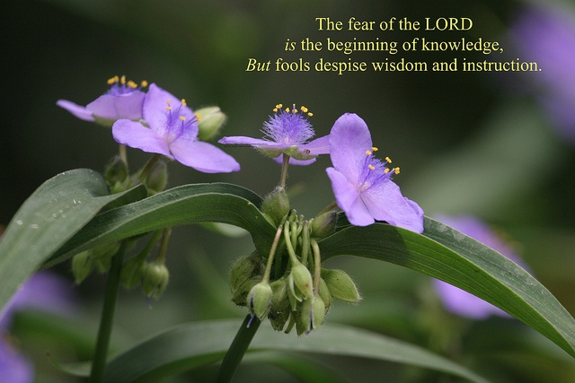 The fear of the Lord is the beginning of knowledge