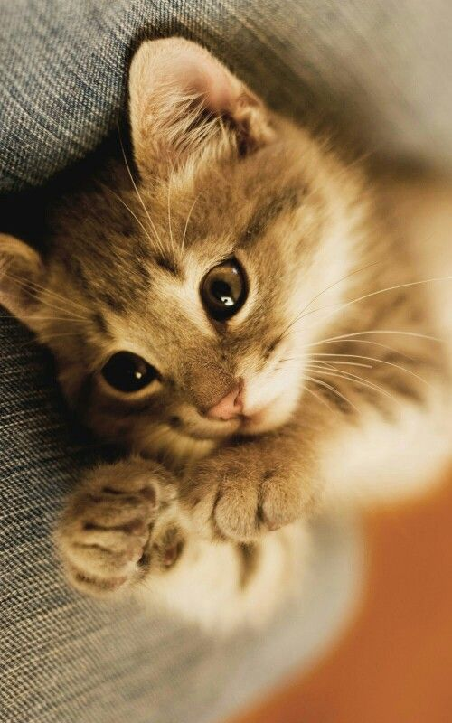 Sweet little kitten