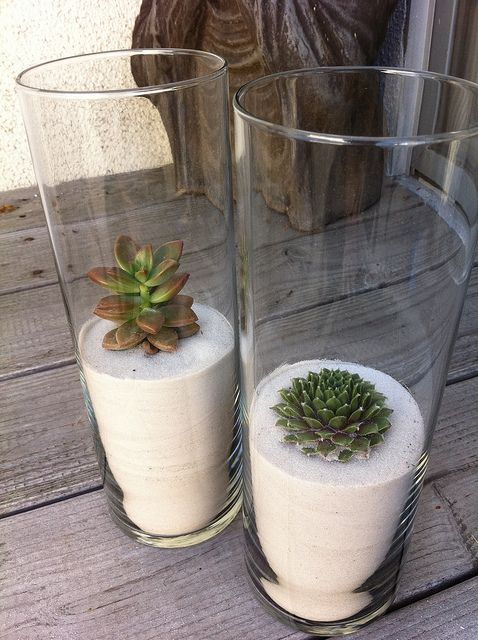 DIY succulents in sand. Cost: $5.50 how elegant but simple. love it! Put a bow on it and give as a gift. go to the dollar store and get your glass container too.