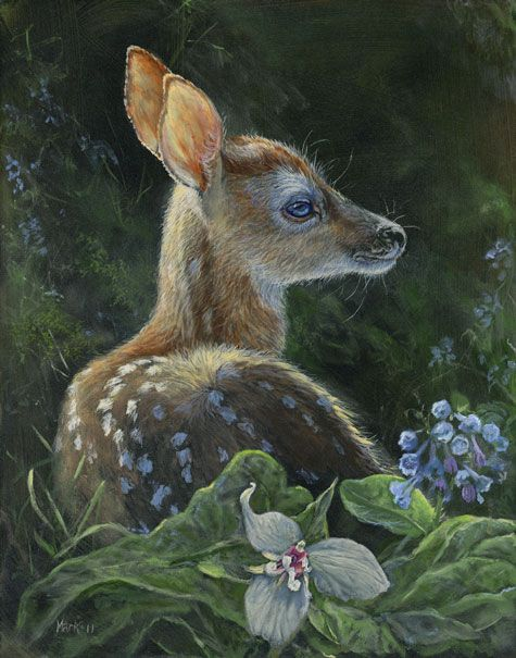 Fawn (White Tail Deer)- by Laura Mark-Finberg / Mark-Finberg Gallery -