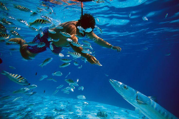 Przyrodniczy raj: JUKATAN - Wyspa Holbox, Villas Paraiso del Mar **** Cena za os. od 632 EUR. Wyżywienie: all inclusive. Termin:  01.08.2015 - 08.08.2015  Hotel w katalogu touroperatora DERTOUR: http://194.1.207.40/produktinfo.php?val=H_CUN75003_AM_KIX_15-05/10