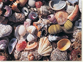 Shelling at Jeffreys Bay, South Africa