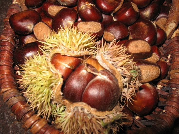 Preserving Chestnuts!: Turkish Nut, Buckeyes,  Horses Chestnut, Preserves Chestnut, Seasons, Chestnut In Baskets Jpg, Chestnut Ripen, Hors Chestnut,  Conkers