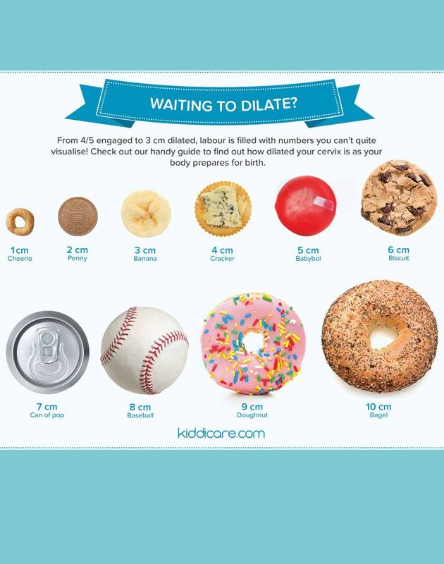 The terrifying visual analogies of cervical dilation of vaginal child birth. The cervix opens from a closed muscle, through the stages of cheerio, penny, banana, ritz cracker, babybel cheese, chipits cookie, pop can, baseball, donut and finally... bagel.