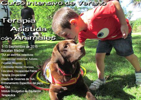 intensivo terapia asistida con animales